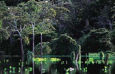 igarape-araquem-alcantara-biodiversidade.jpg